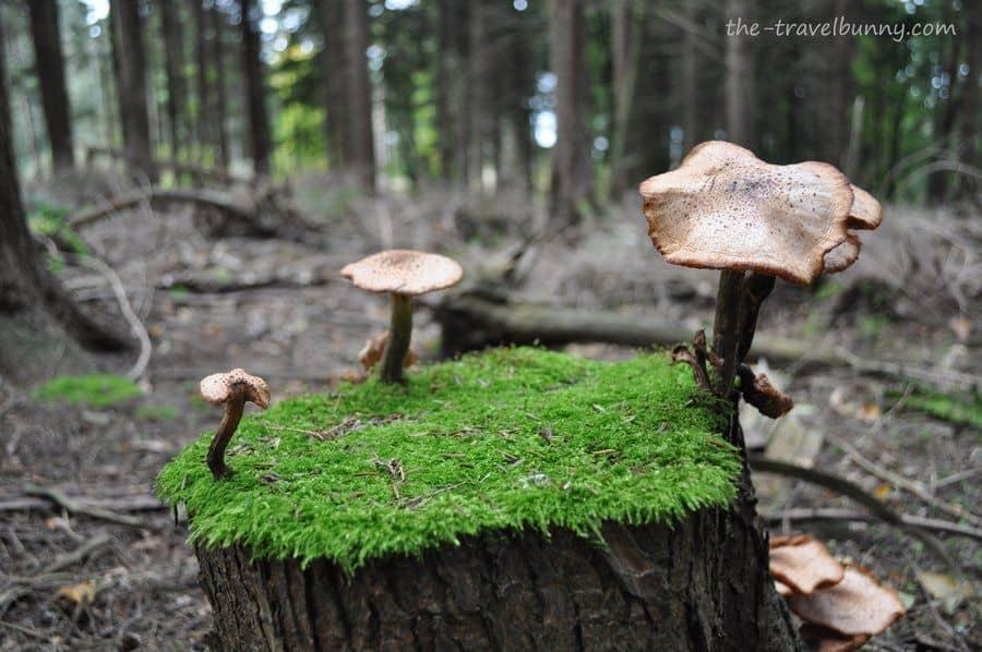 A walk in Battle Great Wood, East Sussex