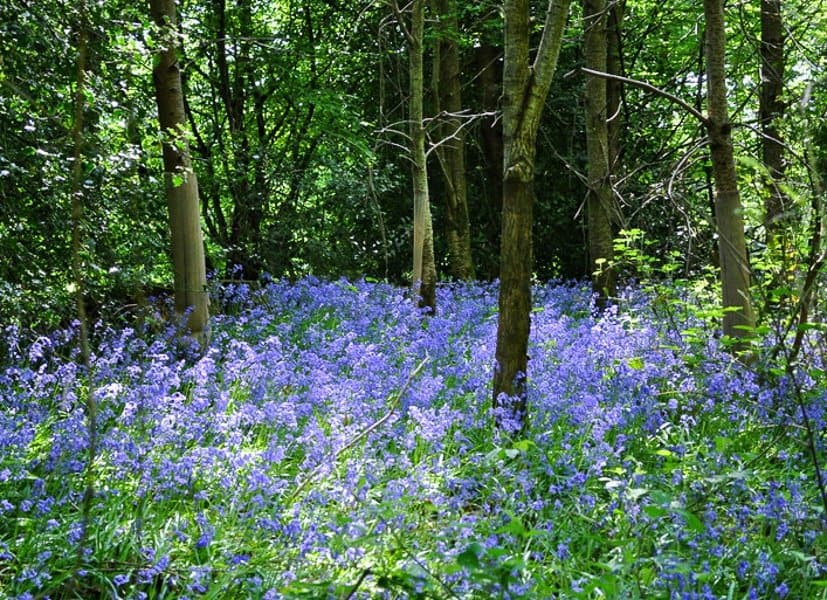 Best Bluebell walk in Sussex