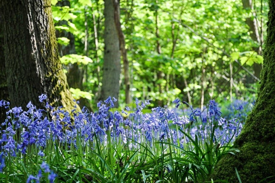 Best Bluebell walk in East Sussex