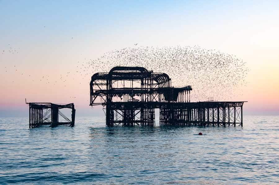 West Pier Murmuration, Brighton