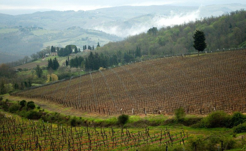 A Misty Tuscan Morning