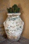 Cacti in Pieve Romanica Garden