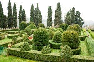 Topiary at The Kitchens at Badia a Passignano