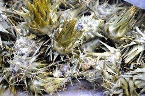 Catania Market - wild artichokes