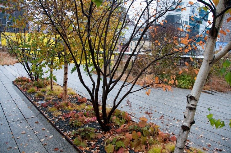 Autumn Colour on the High Line