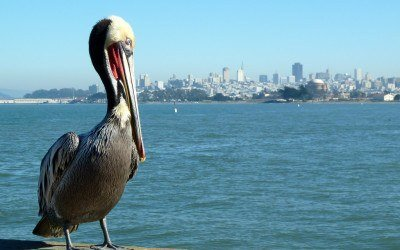 What to See and do in San Francisco