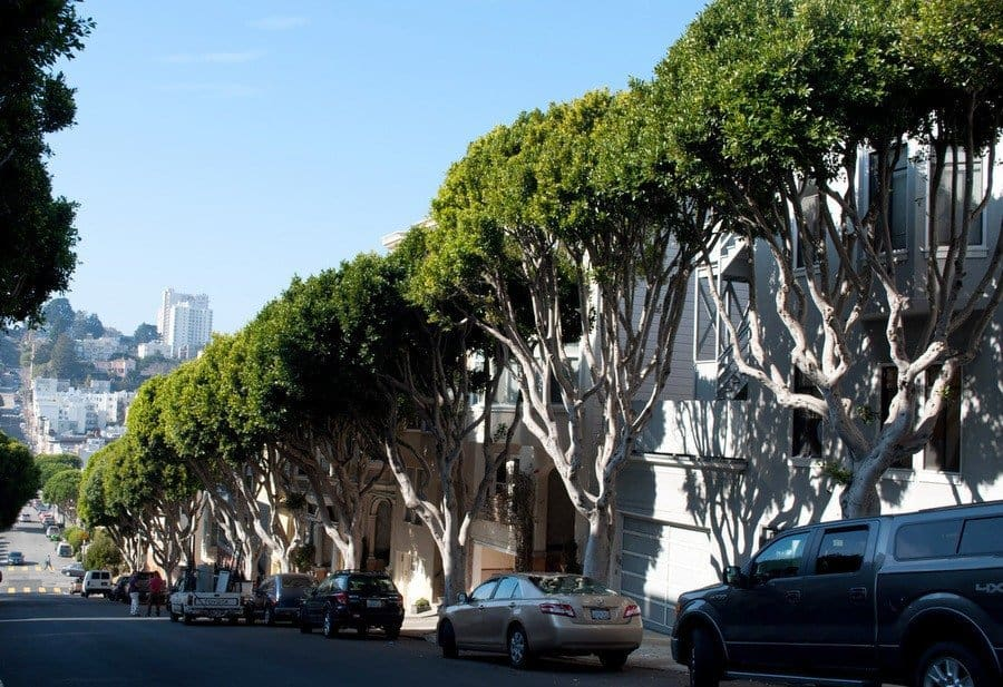 tree-lined-street