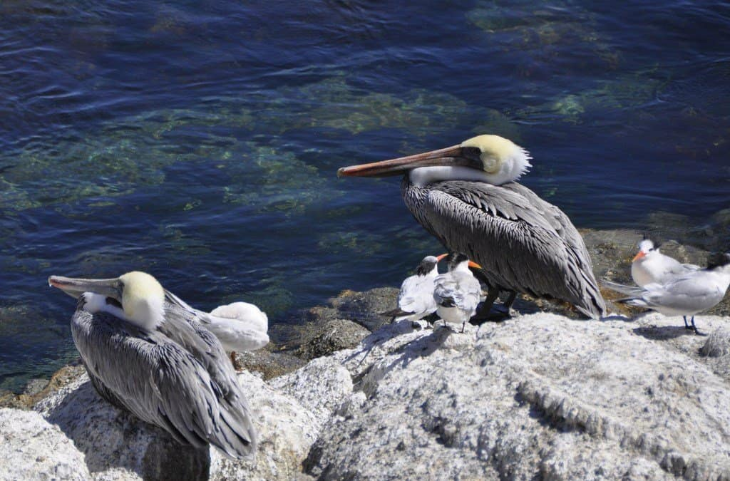 Discovering wildlife in Monterey Bay, California