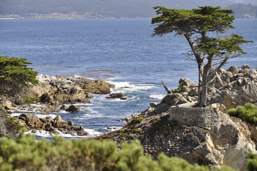Lone Cypress Tree, 17-Mile Drive