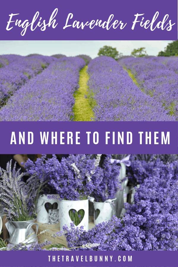 A list of English Lavender Farms open to the public and info on where to find them and whem to visit #lavenderfield #UK