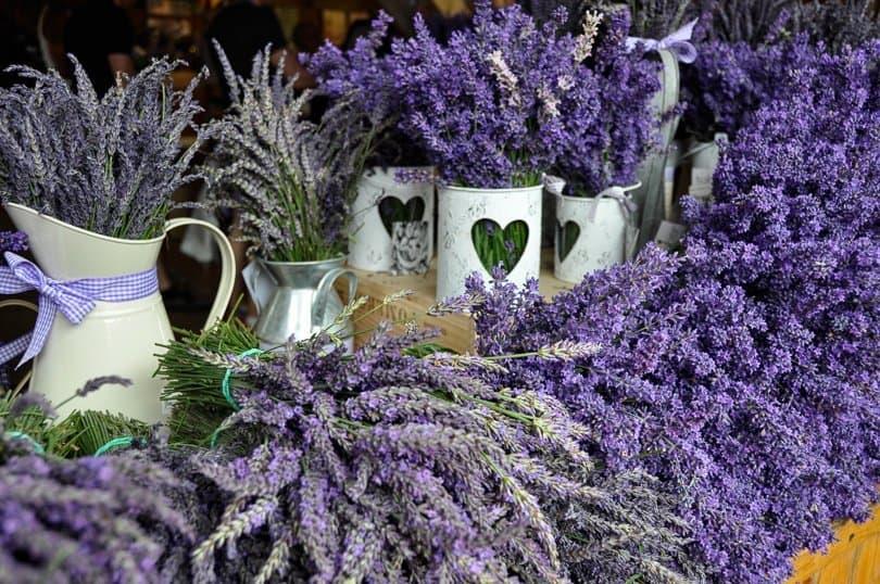 lavender-posies