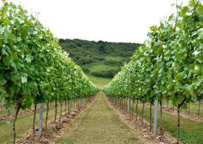 Rathfinny Wine Estate – Home of Sussex Sparkling