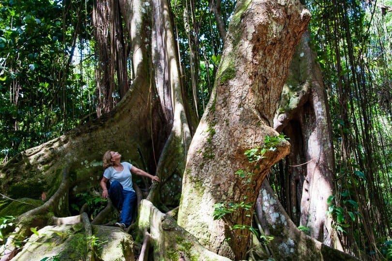 st-kitts-rainforest-1