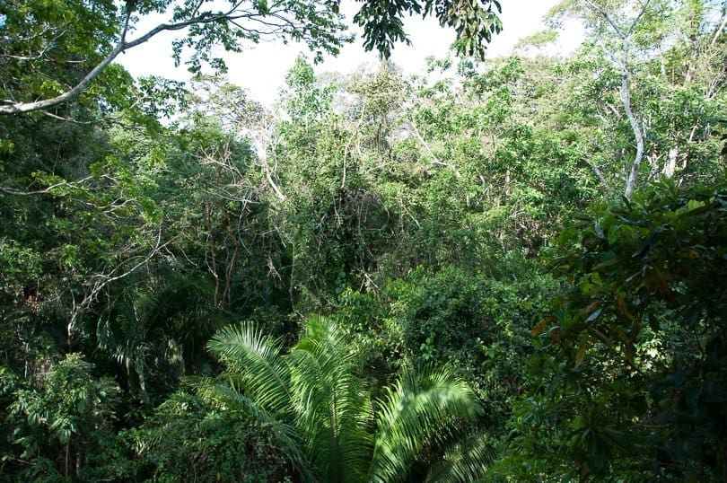 amazon-jungle-canopy