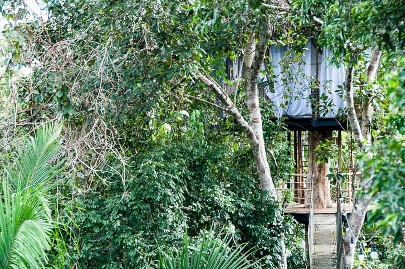 peruvian-jungle-treehouse