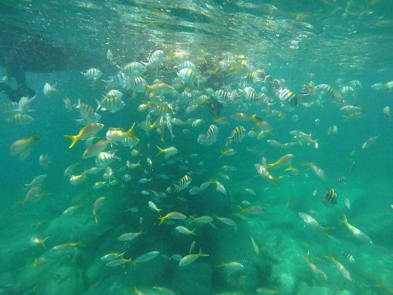 tripical fish st kitts