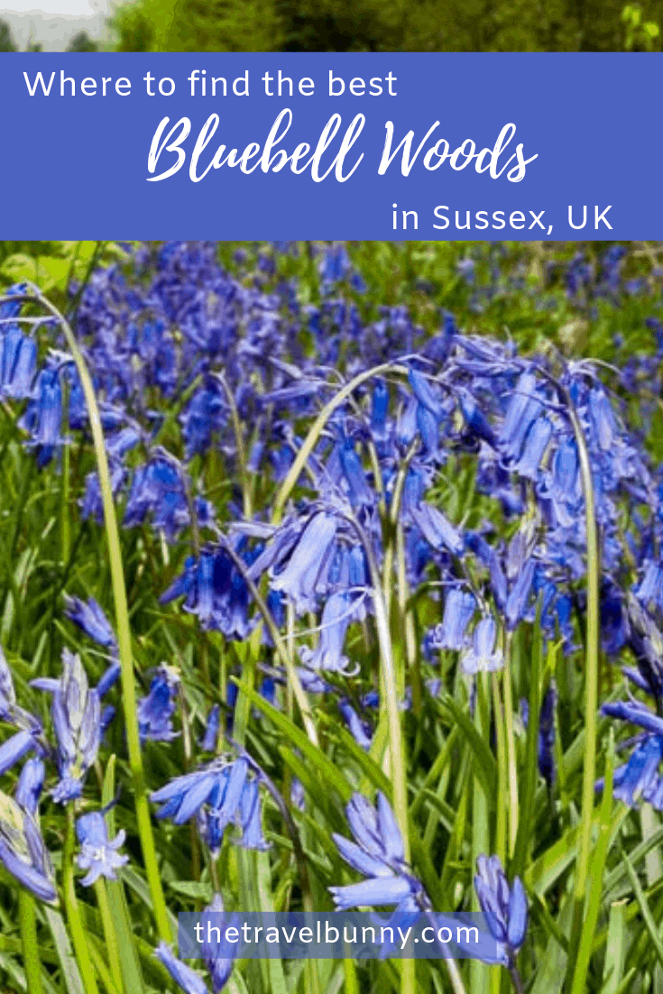 Where to find the best bluebell woods in Sussex. For bluebell walks in East Sussex and West Sussex #bluebells #woods #bluebellwalks