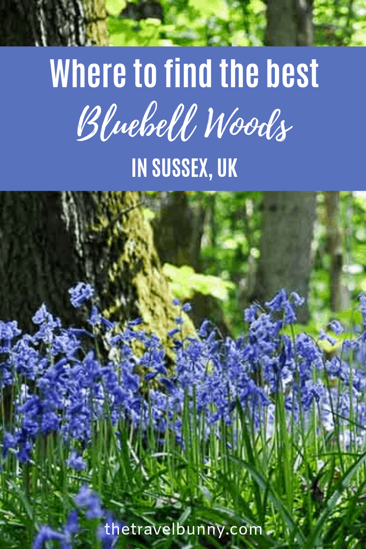 Bluebell Woods Sussex