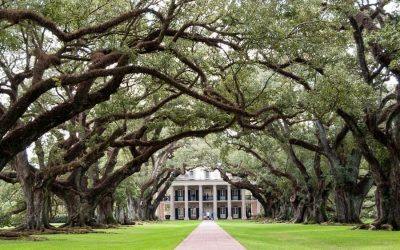 Two of the Best Day Trips from New Orleans