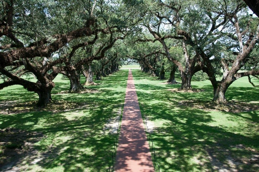 Oak Alley Plantation trees New Orleans