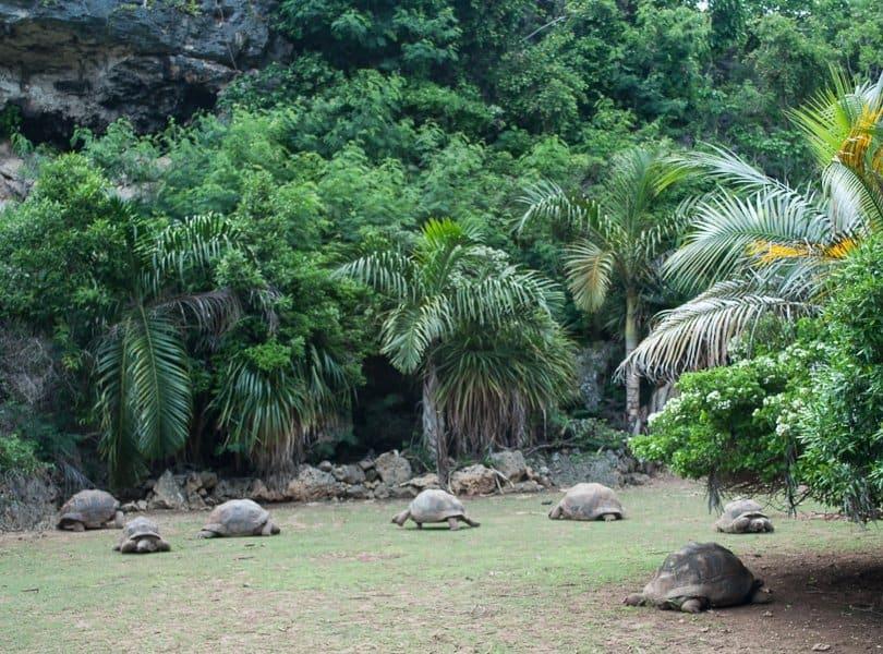 Francois -Leguat-giant-tourtois-reserve-rodrigues