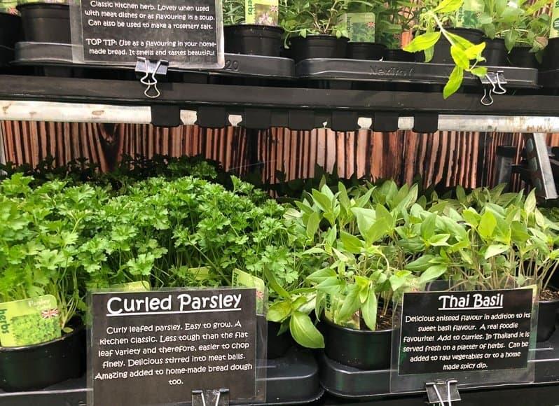 Herbs BBC Good Food Show