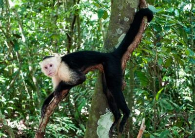 A Costa Rica adventure and road trip