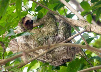 Wildlife, waterfalls and volcano walks in La Fortuna