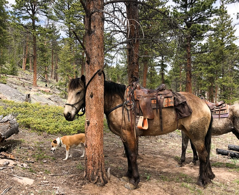 Tethered horse and dog