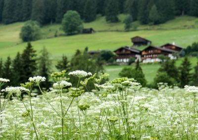 10 reasons to visit Alpbach in Summer