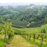 Südsteiermark, Austria | the South Styrian Wine Road