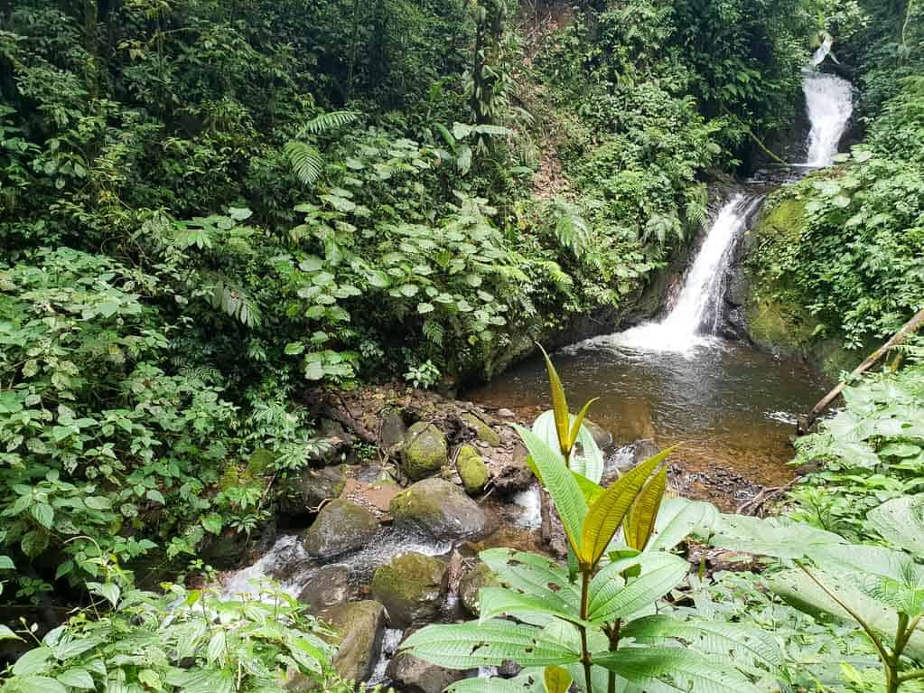 Waterfall in Monteverde Cloud Forest