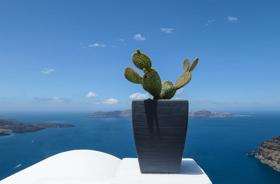 Cacti on rooftoop by Santorini Caldera, Greece