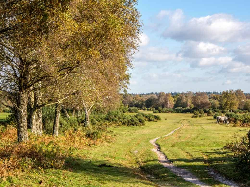 The New Forest National Park, Hampshire